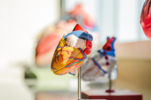 ventricles heart